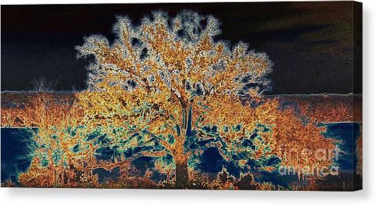 Midnight Moonshine Canvas Print by David Carter