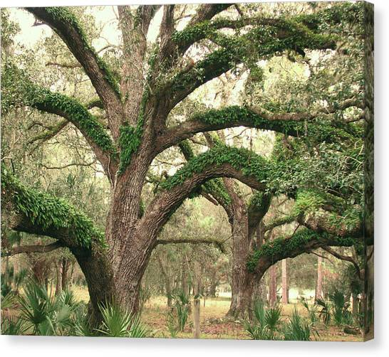 Mighty Oaks Canvas Print