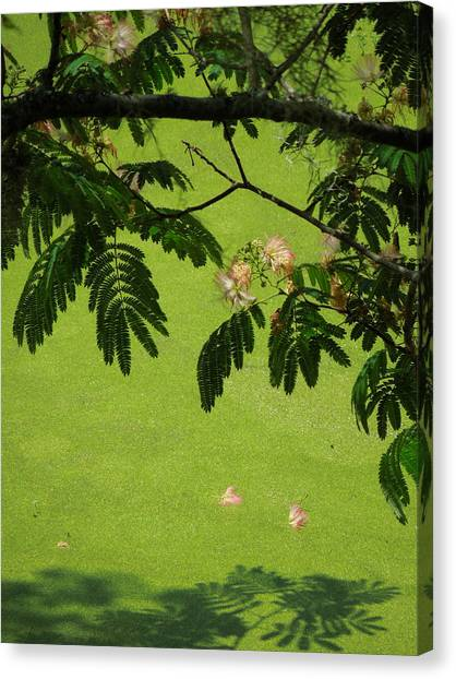 Mimosa Over Swamp Canvas Print by Peg Toliver