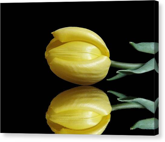 Mirrored Tulip Canvas Print