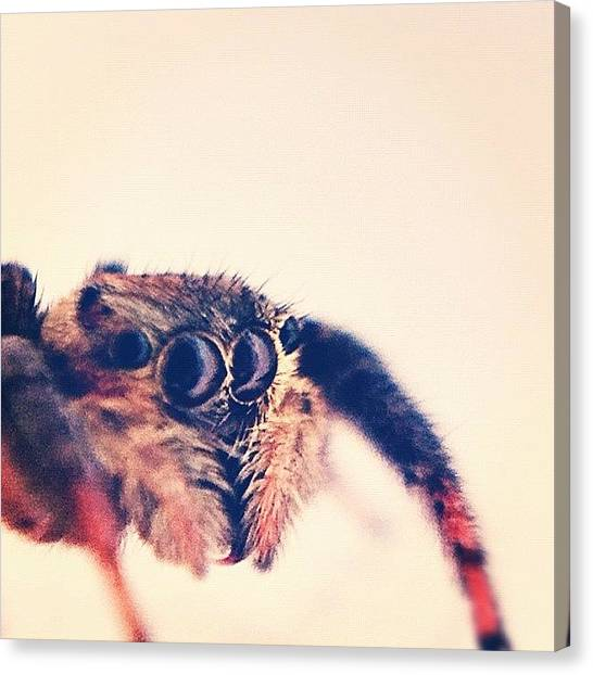 Spiders Canvas Print - Miss Spider #waterdroplens #macro by Amailto Sales