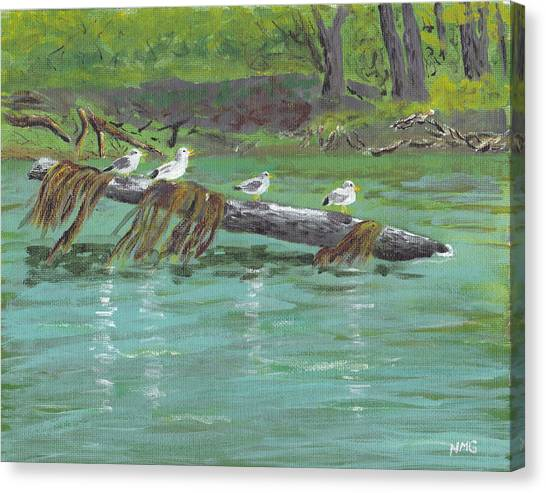 Mississippi River Gulls Canvas Print by Nicole Grattan