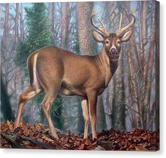 Missouri Whitetail Deer Canvas Print