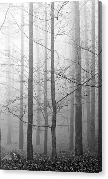 Mistery In The Forrest Canvas Print by Filomena Francisco