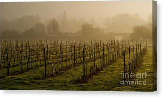 Misty Vines Canvas Print by Urban Shooters