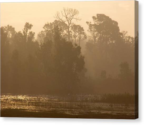 Misty Wetlands Canvas Print
