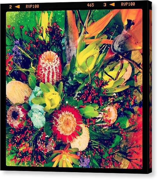 Australian Canvas Print - Mms Anniversary Flowers   by Andrew Coulson