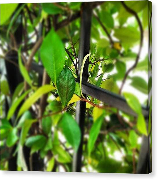 Celebrities Canvas Print - Modern Nature by Ann Miles