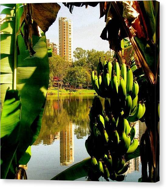 Bananas Canvas Print - Moldura De Banana #lagoigapó #igapó by Gogliardo Maragno