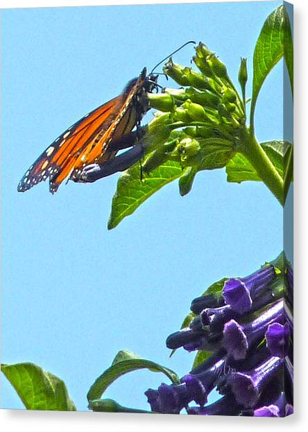Monarch With Purple Flower Canvas Print