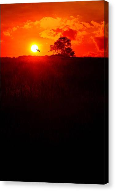 Monatch To The Sun Canvas Print