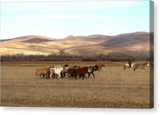 Mongolian Horses Canvas Print