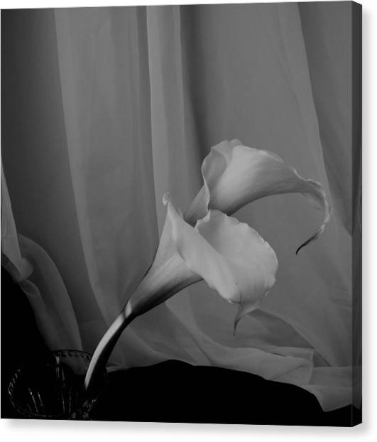 Monochrome Calla Lilies Canvas Print