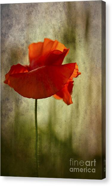 Moody Poppy. Canvas Print