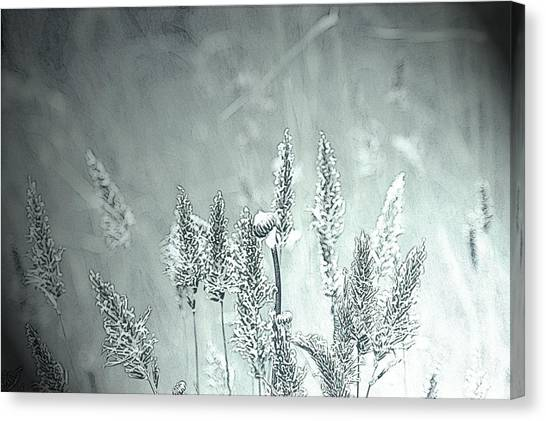 Moonlight Glow Canvas Print by Terrie Taylor