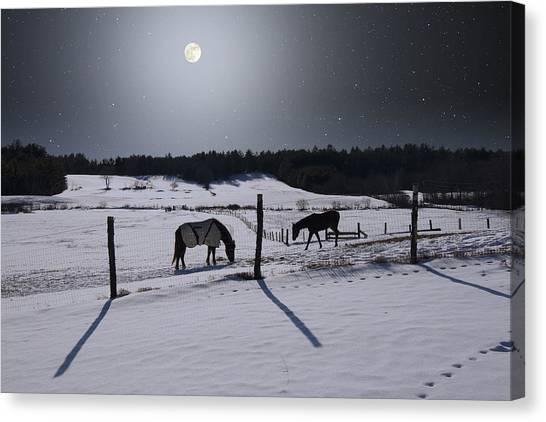 Moonlit Horses Canvas Print