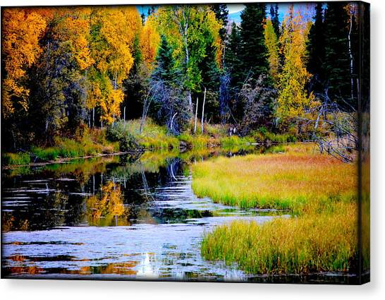 Moose Country Canvas Print
