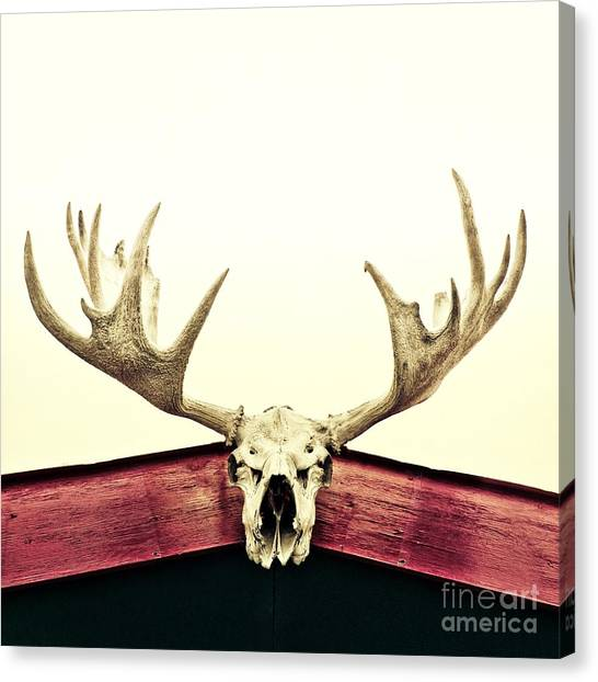 Hunting Canvas Print - Moose Trophy by Priska Wettstein