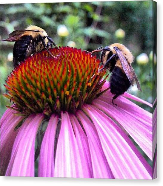 Droid Canvas Print - More #bees .  Another #beautiful by Carla From Central Va  Usa