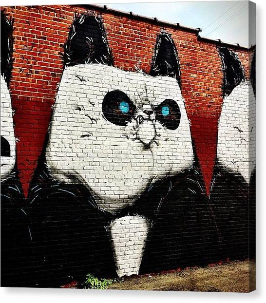 Panda Canvas Print - More #g40. This Guy Is My Fav. #rva by Clifford Drake