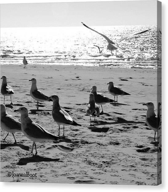 Lake Michigan Canvas Print - More Seagulls by Joanna Boot