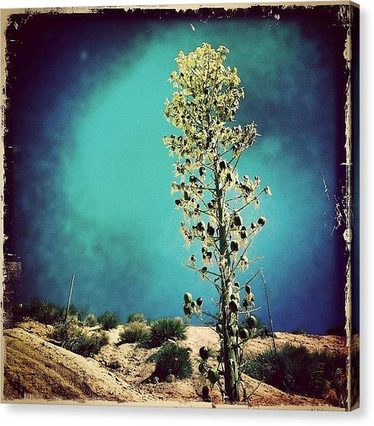 Outer Space Canvas Print - Mormon Rocks Hike by Kim Peeples