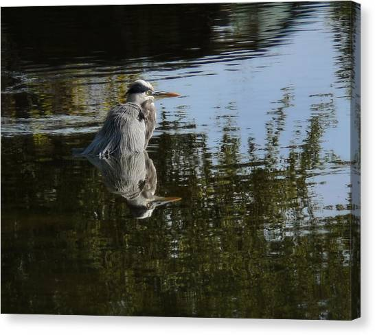 Morning Bath Canvas Print