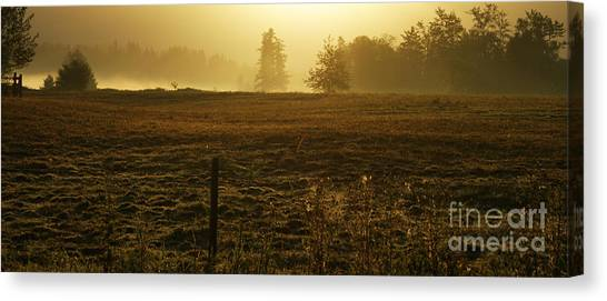 Morning Glow Canvas Print by Terrie Taylor