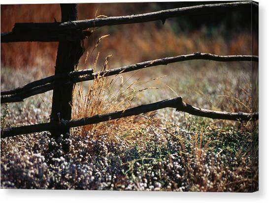 Morning Grass Canvas Print by Carlos Diaz