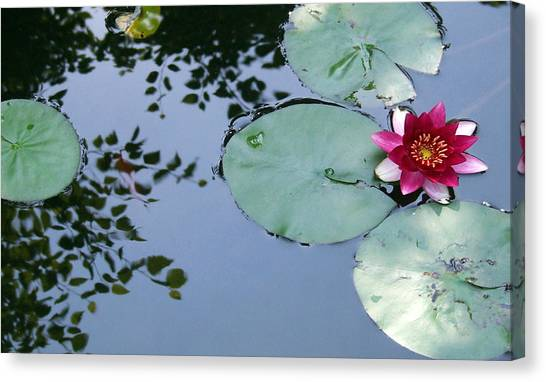 Morning Lilly Canvas Print