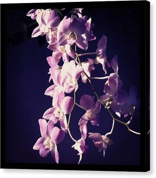 Baby Canvas Print - #morningphoto #orchid #purple&white by Amber Baby