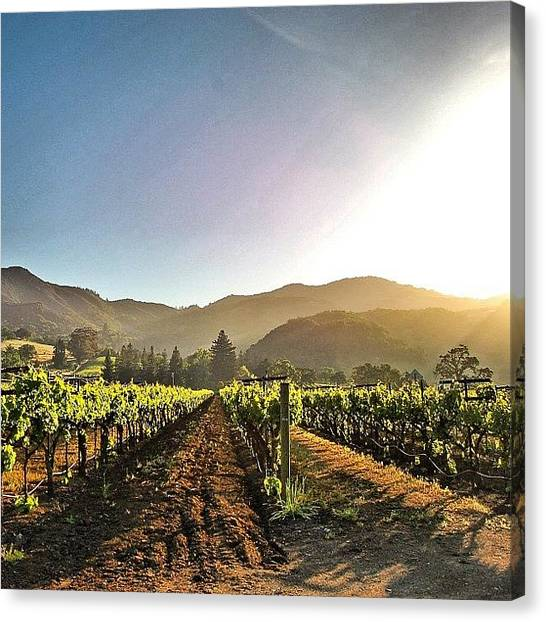 Vineyard Canvas Print - Mornings At Kenwood by Crystal Peterson