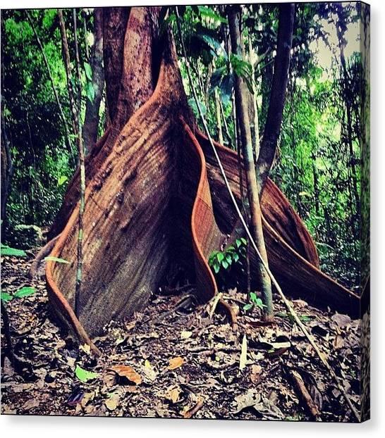 Rainforests Canvas Print - #mosman Gorge #cairns #qld #tropics by Shayle Graham