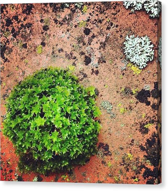 Gardens Canvas Print - Moss And Lichen by Nic Squirrell