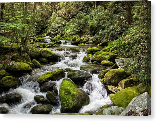 Mossy Creek Canvas Print