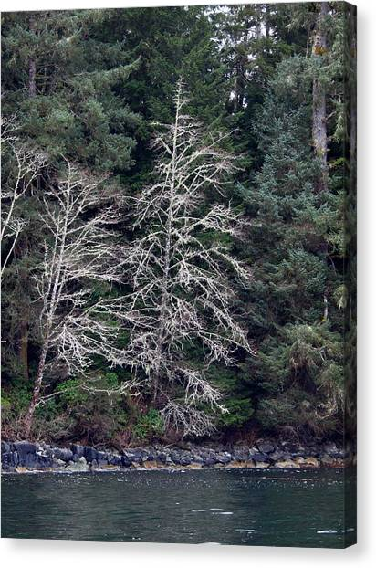 Mossy Trees Canvas Print by Jim Moore