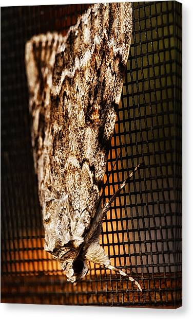 Moth Canvas Print by Linda Tiepelman
