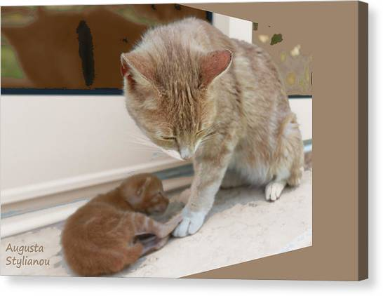 Augusta Canvas Print - Mother And Kitten by Augusta Stylianou