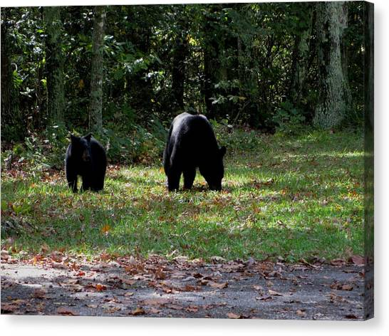 Mother Bear And Cub Canvas Print by Kathy Long