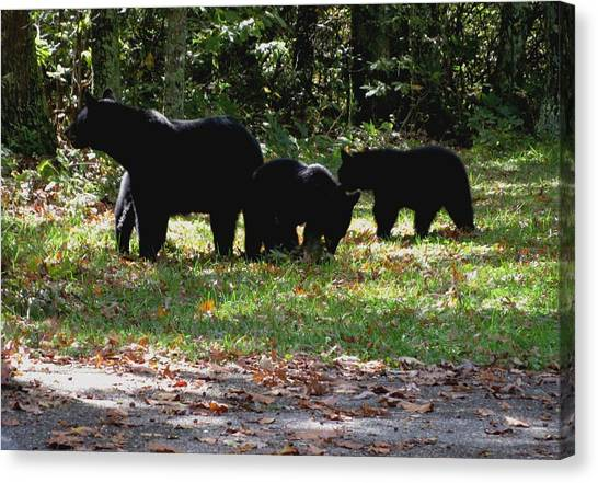 Mother Bear And Three Cubs Canvas Print by Kathy Long