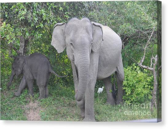 Mother Elephant And Baby Canvas Print