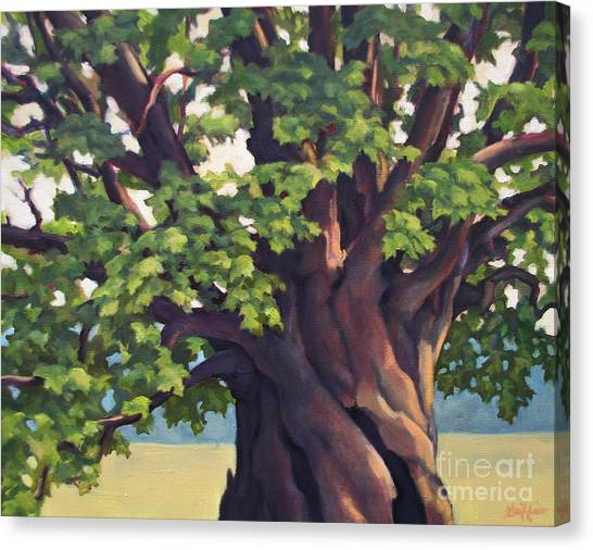 Mother Maple Canvas Print