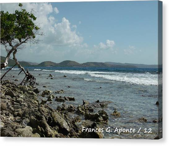 Mother Nature Canvas Print by Frances G Aponte