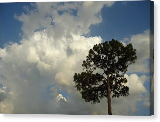 Mottled Clouds And Scrub Pine Canvas Print by Debbie Wassmann