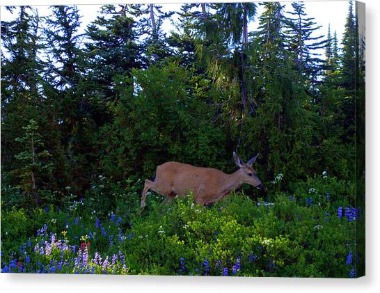 Mount Rainier Deer Canvas Print