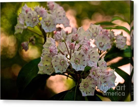 Mountain Laurel Flowers 2 Canvas Print