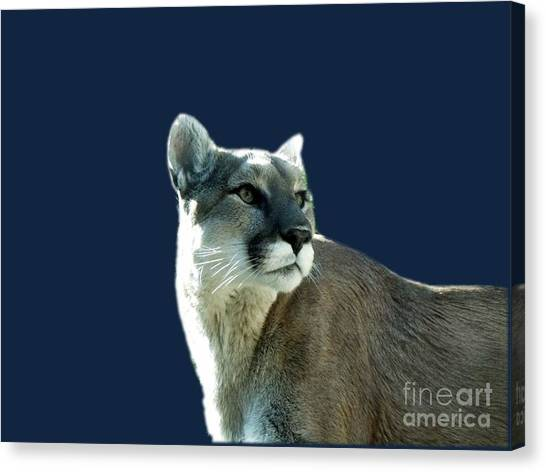 Mountain Lion Beauty Canvas Print by Donna Parlow