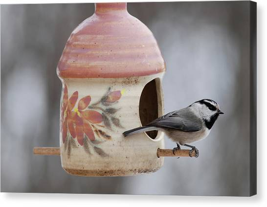 Mountian Chickadee At Feeder Canvas Print