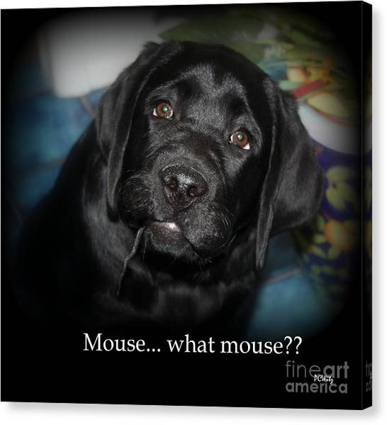 Mouse---what Mouse Canvas Print
