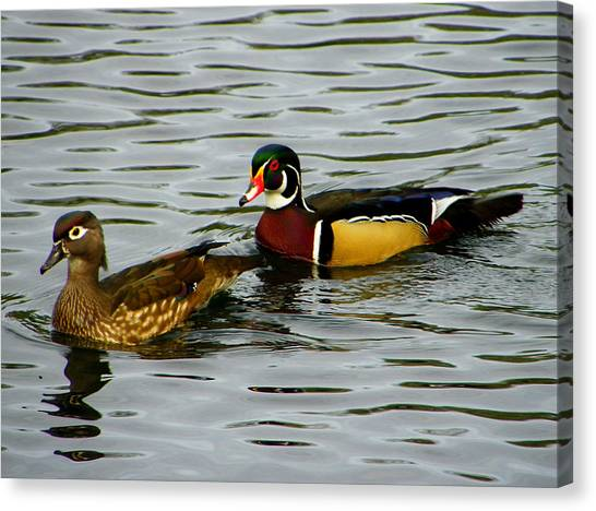 Mr And Mrs Wood Duck Canvas Print by Judy Wanamaker